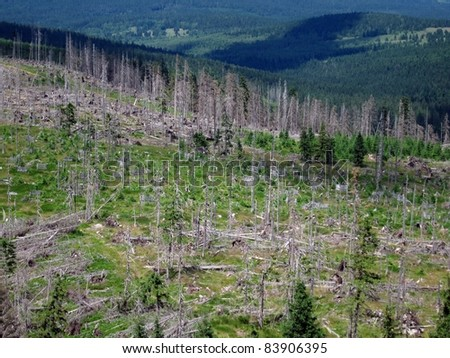 Destroyed forest as an effect of strong storm in Sumava, Czech republic