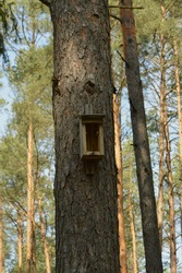 Destroyed nesting box for birds on a pine.