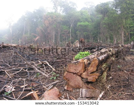 Destroyed tropical rainforest in Amazonia Brazil Image taken on 20 January 2010