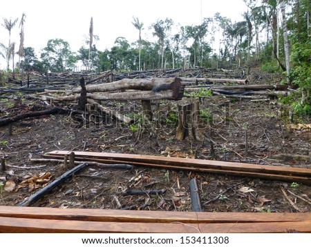 Destroyed tropical rainforest in Amazonia. Image taken on 7th March 2013