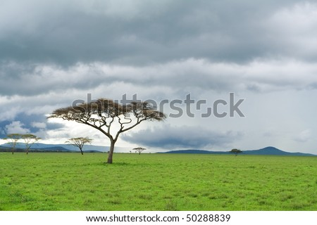 detached tree, green grassland and storm cloud in savanna - stock photo