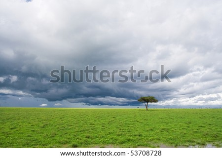 detached tree, green grassland and storm cloud in savanna