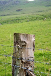 Detail, Barbed Wire Fence