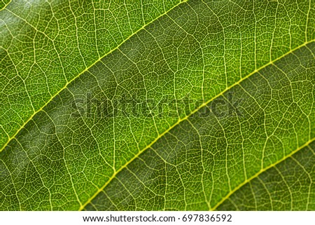 Detail from a leaf.  #697836592