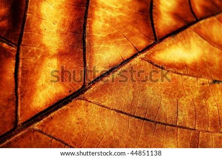 detail leaf