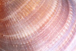 Detail macro of a marine seashell. Amazing colorful shell and luxury pearl texture