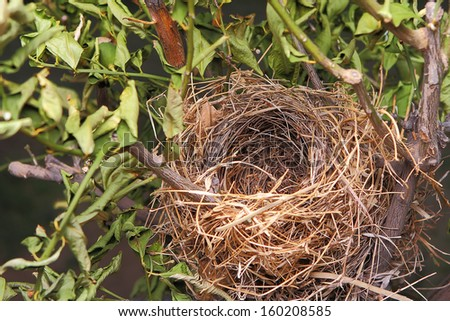Detail of a beautiful natural empty birds nest in a tree