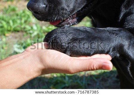 Detail of a black labrador's paw with woman in park. #716787385