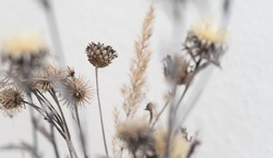 detail of a bunch of dried flowers and grass