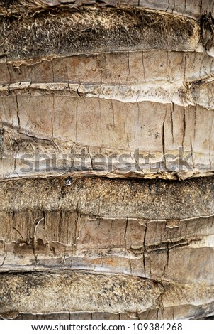 Detail of a Coconut palm - Palm tree bark texture - Rough brown palm tree wood bark natural texture background