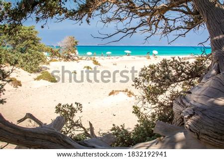 Detail of a dried up cedar  tree ,white sand,blue water,beach ,Chrissi island,Greece