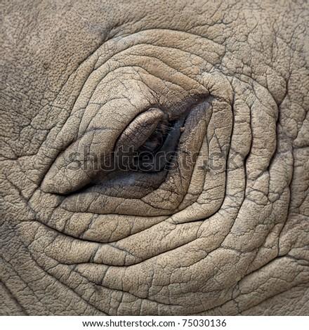 detail of a eye great one-horned rhinoceros
