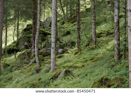 Detail of a forest with pine trees