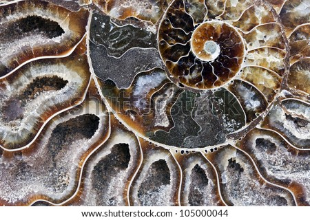 Detail of a Fossilized Ammonite from the Jurassic.