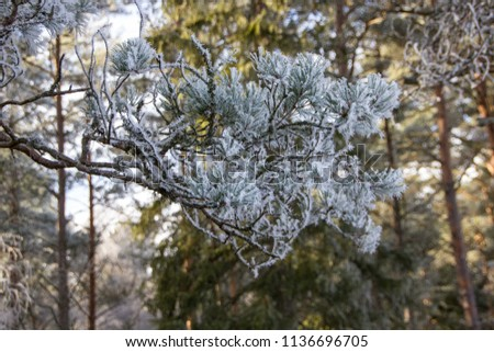 Detail of a frozen twig outdoors, signalizing winter will come soon with frosty twigs and branches covered with tiny and little spikes, creating a gray and cold atmosphere #1136696705