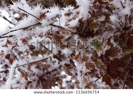Detail of a frozen twig outdoors, signalizing winter will come soon with frosty twigs and branches covered with tiny and little spikes, creating a gray and cold atmosphere #1136696714