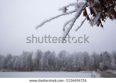 Detail of a frozen twig outdoors, signalizing winter will come soon with frosty twigs and branches covered with tiny and little spikes, creating a gray and cold atmosphere #1136696726
