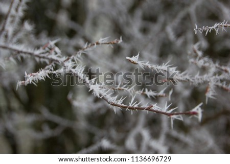 Detail of a frozen twig outdoors, signalizing winter will come soon with frosty twigs and branches covered with tiny and little spikes, creating a gray and cold atmosphere #1136696729