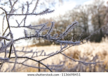Detail of a frozen twig outdoors, signalizing winter will come soon with frosty twigs and branches covered with tiny and little spikes, creating a warm although cold atmosphere with field landscape  #1136698451