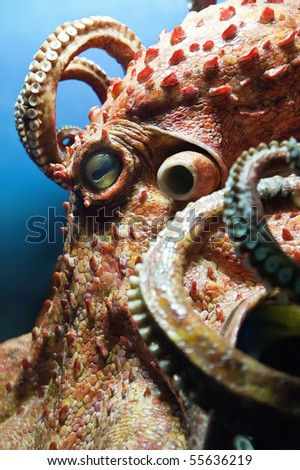 Detail of a Giant Octopus