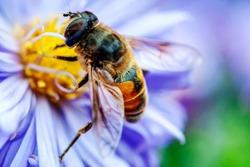 detail of a honeybee in a flower