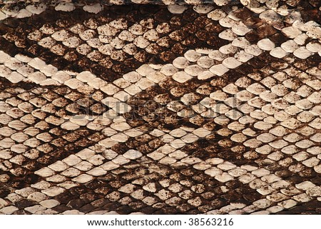 Detail of a real skin of a snake with scales pattern