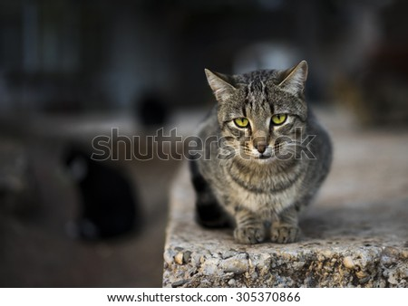 Detail of a reclining cat against an out of focus background. Rich color and exquisite detail
