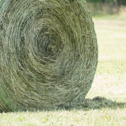 Detail of a rounded hay bale in a grassland for hay harvest. The hay roll consists of dried grassland plants and is compressed by a baler in a round bale net colored green and white.
