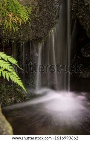 Detail of a waterfall with moss and ferns. Vertical photo. Concept of nature, tranquility.