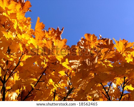 detail of a yellow autumn tree in the sun