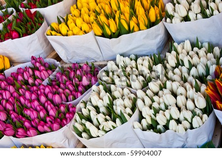 Detail of Amsterdam flowers market: the best tulips of the world