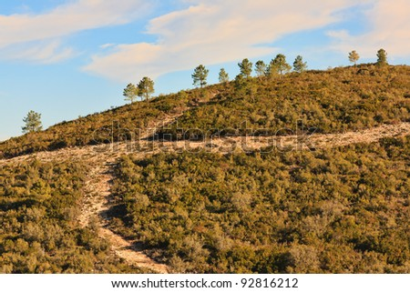 Detail of an Hill with gravel crossroad and pine trees