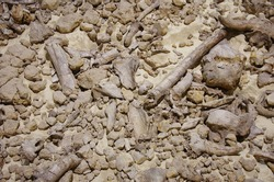 Detail of an ossuary, the remains of bones of many prehistoric animals can be seen.