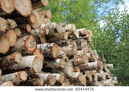 Detail of birch logs piled up in green forest.