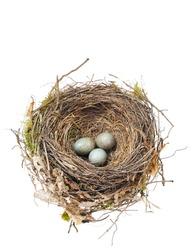 Detail of blackbird eggs in nest isolated on white