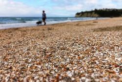 detail of broken shells on beach