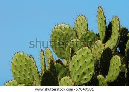 Detail of cactus growing in  Puerto Escondido #57049501