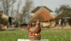 Detail of chocolate eastern hen on spring meadow with farmyard in the background.