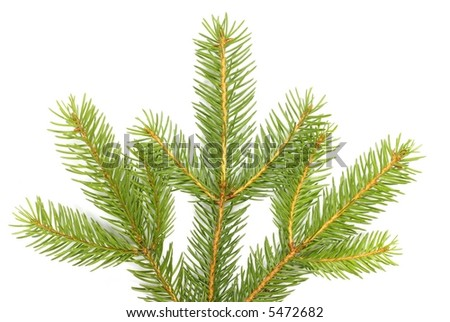 Detail of christmas tree branches on white background #5472682
