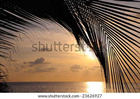 Detail of coconut palm tree leaf silhouette against tropical beach on sunset