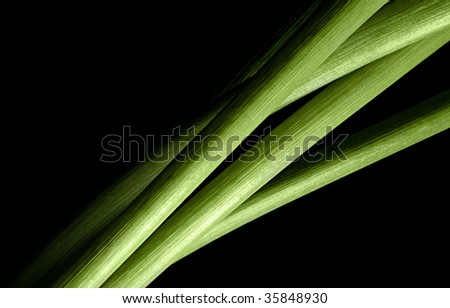 detail of curving green flower stems on black