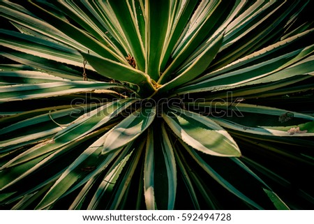 detail of dark palm leaves for graphic background.
