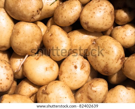 Detail of fresh garden potatoes
