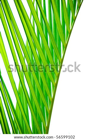 detail of green palm tree leaves texture. - stock photo