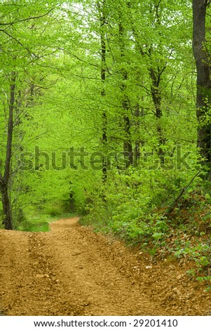 Detail of green spring forest with brown path.