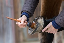 detail of hoof care at a horse
