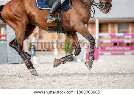 Detail of horse hooves from showjumping competition. ストックフォト ©