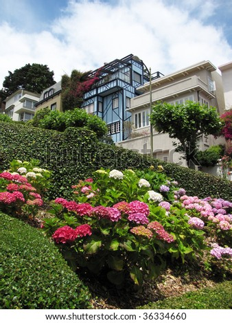 detail of lombard street at san francisco during summer time
