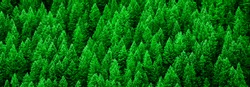 Detail of lush green pine forest of trees on mountainside in wilderness showing environment