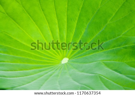 Detail of nature, macro abstract green leaf, fresh and sereen image with pattern, texture, background image with detail, Stockfoto ©